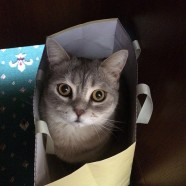 Moving With a Pet: How To Relocate With a Cat